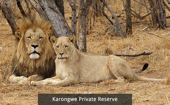 South Africa - Victoria Falls - Chobe Tour | South Africa Travel